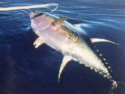 Fishybuzz