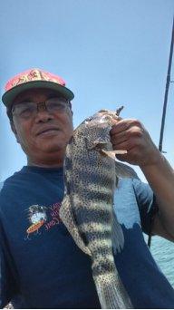 mackereljoe