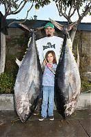BIG FISH BEANO