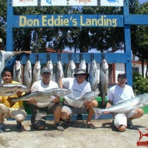 Wide open White Seabass in San Quintin