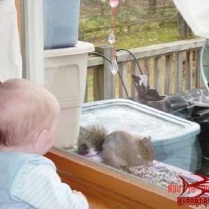 Ryan Squirrel