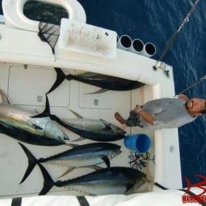 Deck Of Tuna