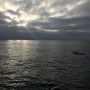 Dolphin sunrise